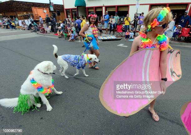 ZouZou the dog had had enough of the parade and couldn't be coaxed onward by Lena Gitkind during the Pet Parade as part of the Louisville Labor Day...