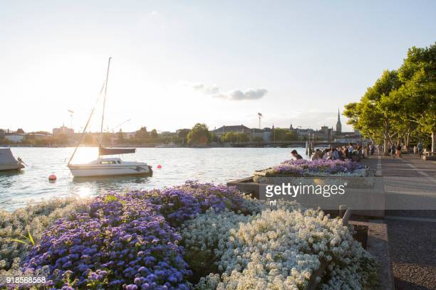 zürich's lake banks - zurich stock photos and pictures