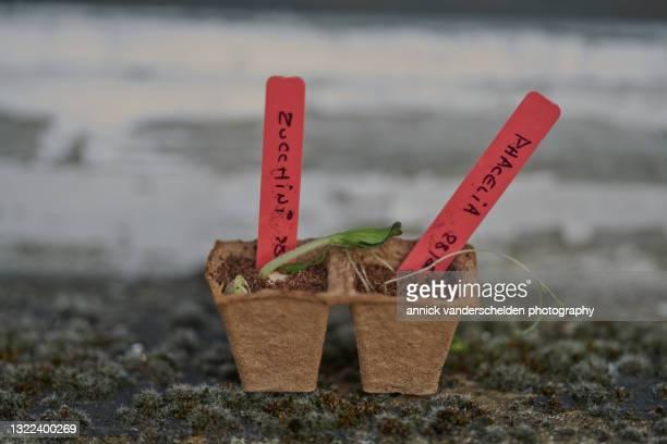 zucchini and phacelia - annick vanderschelden stock pictures, royalty-free photos & images