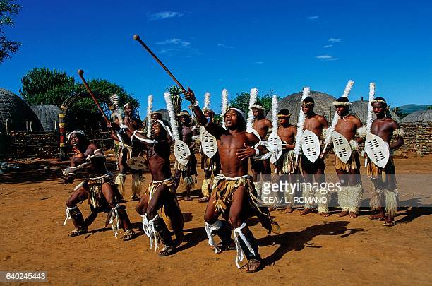 Zulu warriors during a Ngoma traditional dance Zulu village KwaZuluNatal South Africa