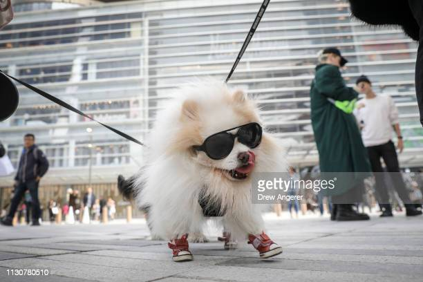 Zunky the dog walks outside of 'The Shops' during the grand opening of phase one of the Hudson Yards development on the West Side of Midtown...