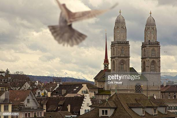 Zurich city view with mountains and flying pigeon