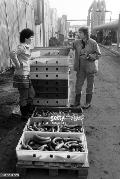 Zwei Frauen an Kisten mit grünen Gurken vor den Gewächshäusern des VEG Vockerode aufgenommen im März 1986 Mit 64 Hektar war Vockerode eine der...