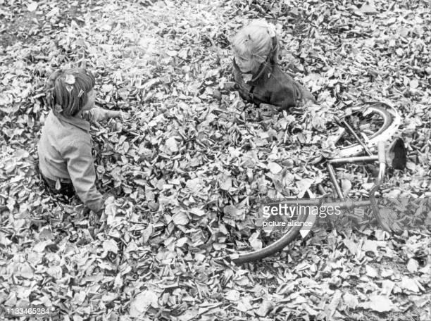 Zwei kleine Mädchen wühlen im Oktober 1959 in einem dicken Berg voller Herbstlaub Sogar ihr Fahrrad liegt schon halb versteckt unter dem Blätterberg