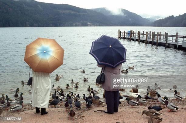 Zwei Spaziergänger mit Regenschirmen stehen am Ufer des Titisees im Schwarzwald um füttern Enten. Aufnahme vom . Foto: Rolf Haid +++ dpa - Report+++