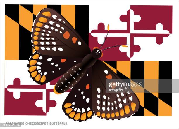 baltimore checkerspot butterfly - chesapeake bay stock illustrations, clip art, cartoons, & icons