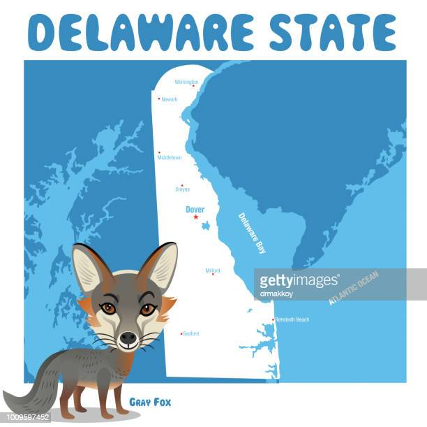 delaware gray fox - newark delaware stock illustrations, clip art, cartoons, & icons