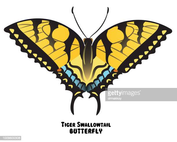 swallowtail butterfly - newark delaware stock illustrations, clip art, cartoons, & icons