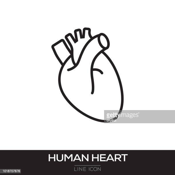 ilustraciones, imágenes clip art, dibujos animados e iconos de stock de corazón humano línea icono - cardiólogo