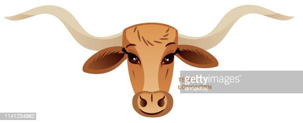 154 Texas Longhorn Cattle High Res Illustrations Getty Images
