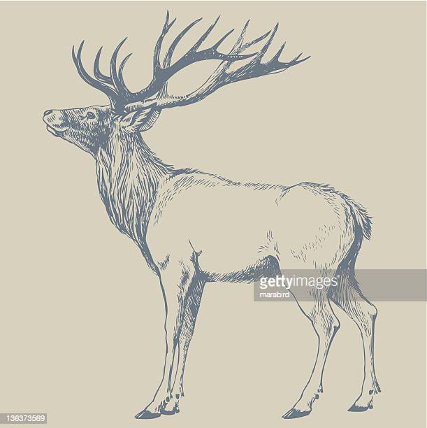 deer - bucks stock illustrations