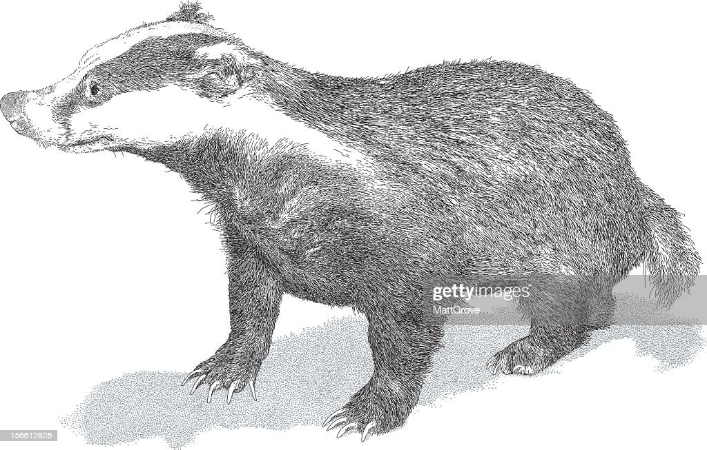 HAND DRAWN BLACK AND WHITE HONEY BADGER
