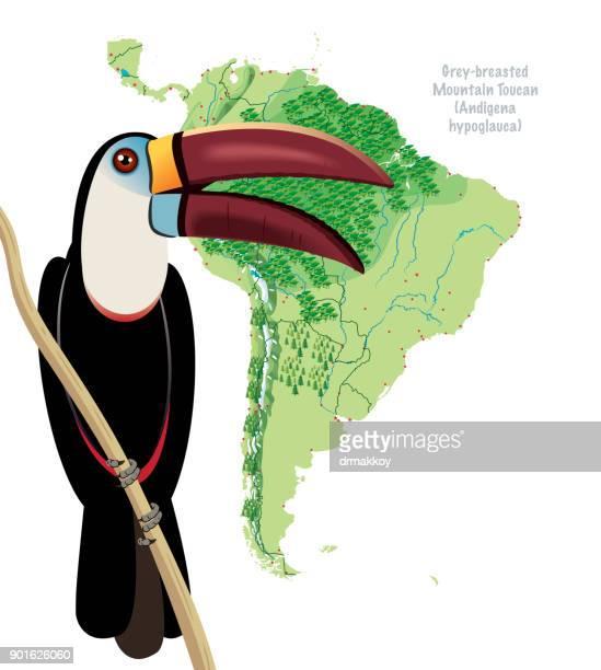 ilustraciones, imágenes clip art, dibujos animados e iconos de stock de tucán de américa del sur - biodiversidad