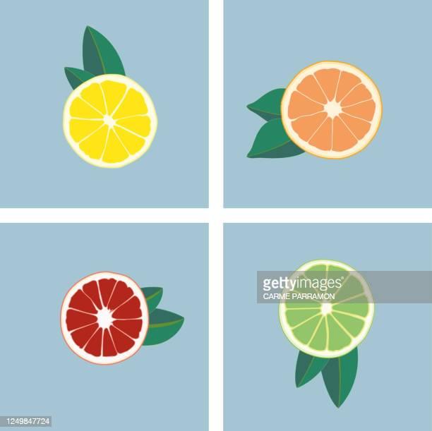 ilustraciones, imágenes clip art, dibujos animados e iconos de stock de fruta abstracta multicolor. naranjas, limones y limas - naranja fruta cítrica