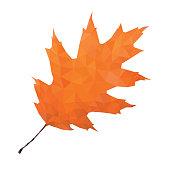 Abstract Single Oak Leaf