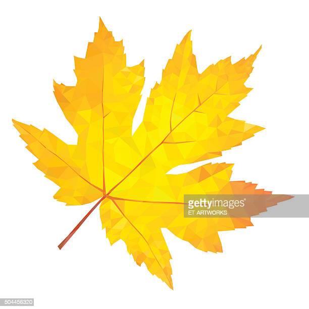 Abstrakte single gelbe Ahorn Blätter