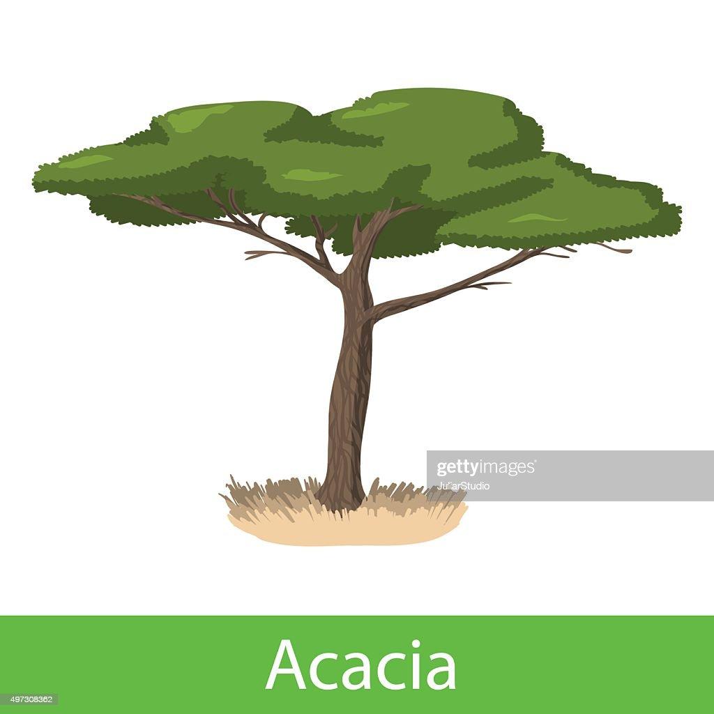 Acacia cartoon tree