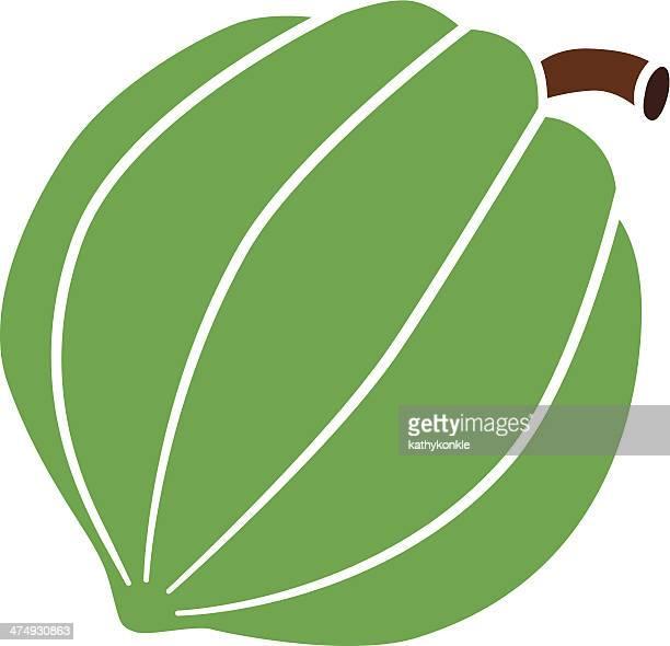 acorn squash in color
