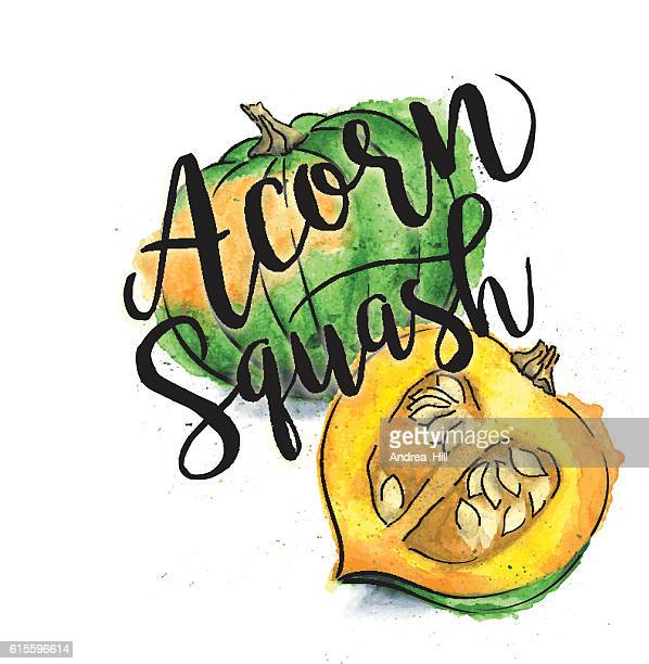 Acorn Squash Painted in Watercolor with Text - Vector Illustration