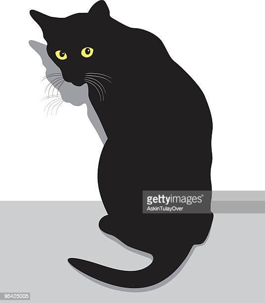 Afraid Cat
