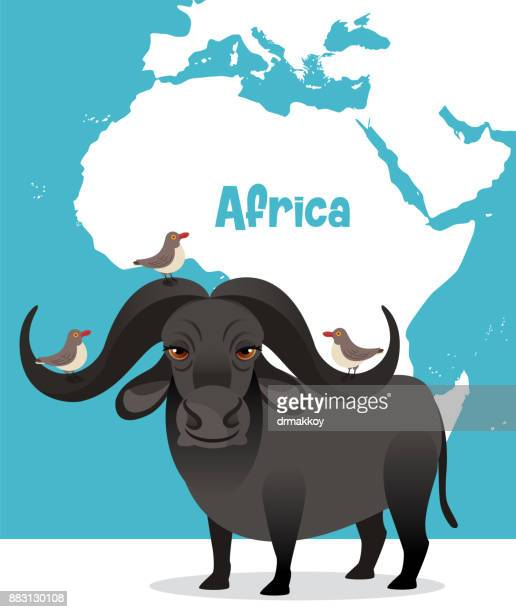 africa bufalo - african buffalo stock illustrations, clip art, cartoons, & icons