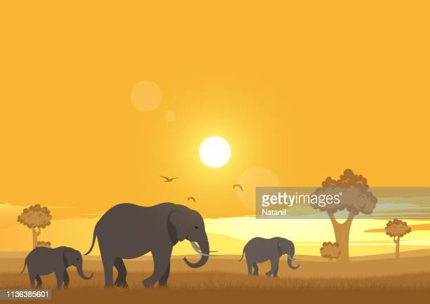 ilustrações de stock, clip art, desenhos animados e ícones de africa - elefante