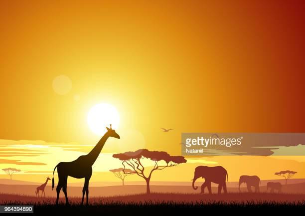 africa - sunset stock illustrations