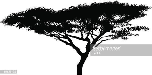 アフリカアカシアの木のシルエット - アカシア点のイラスト素材/クリップアート素材/マンガ素材/アイコン素材