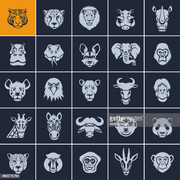 african animal face icons - animal wildlife stock illustrations