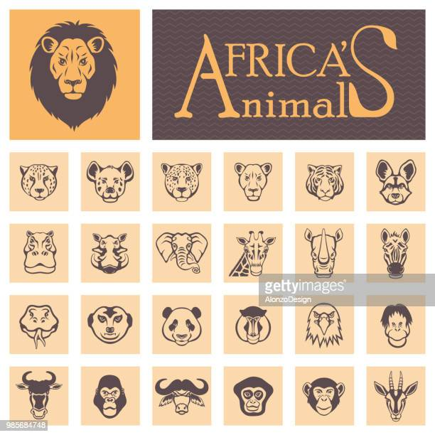 african animal faces - african buffalo stock illustrations, clip art, cartoons, & icons
