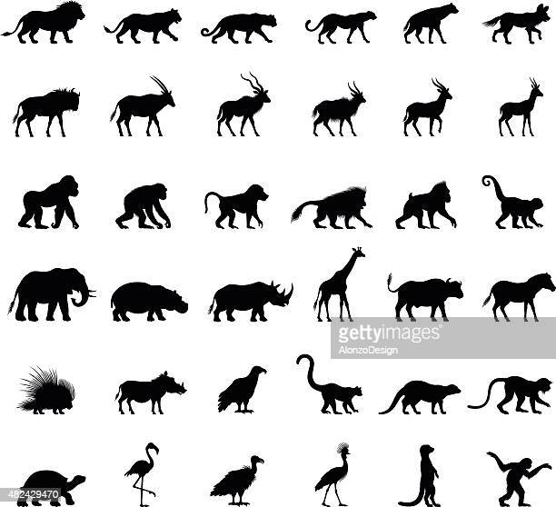 african animal silhouettes - mammal stock illustrations