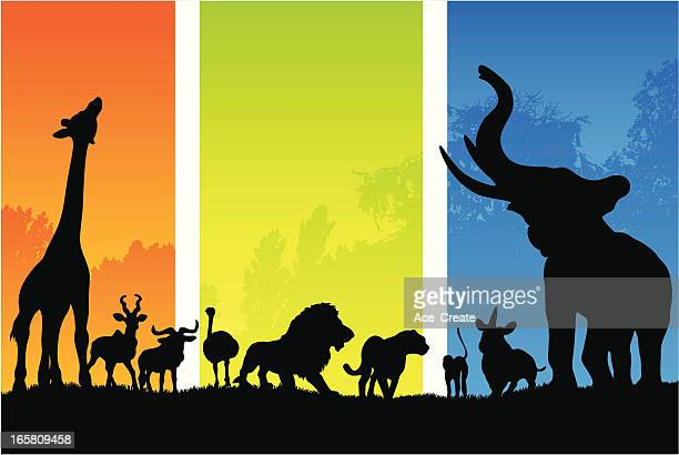 African animals in silhouette from morning to night