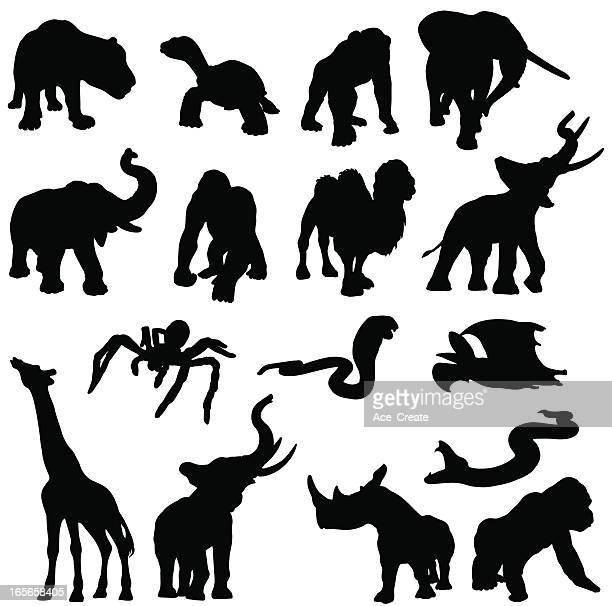 afrikanische tiere in form - chimpanzee stock-grafiken, -clipart, -cartoons und -symbole