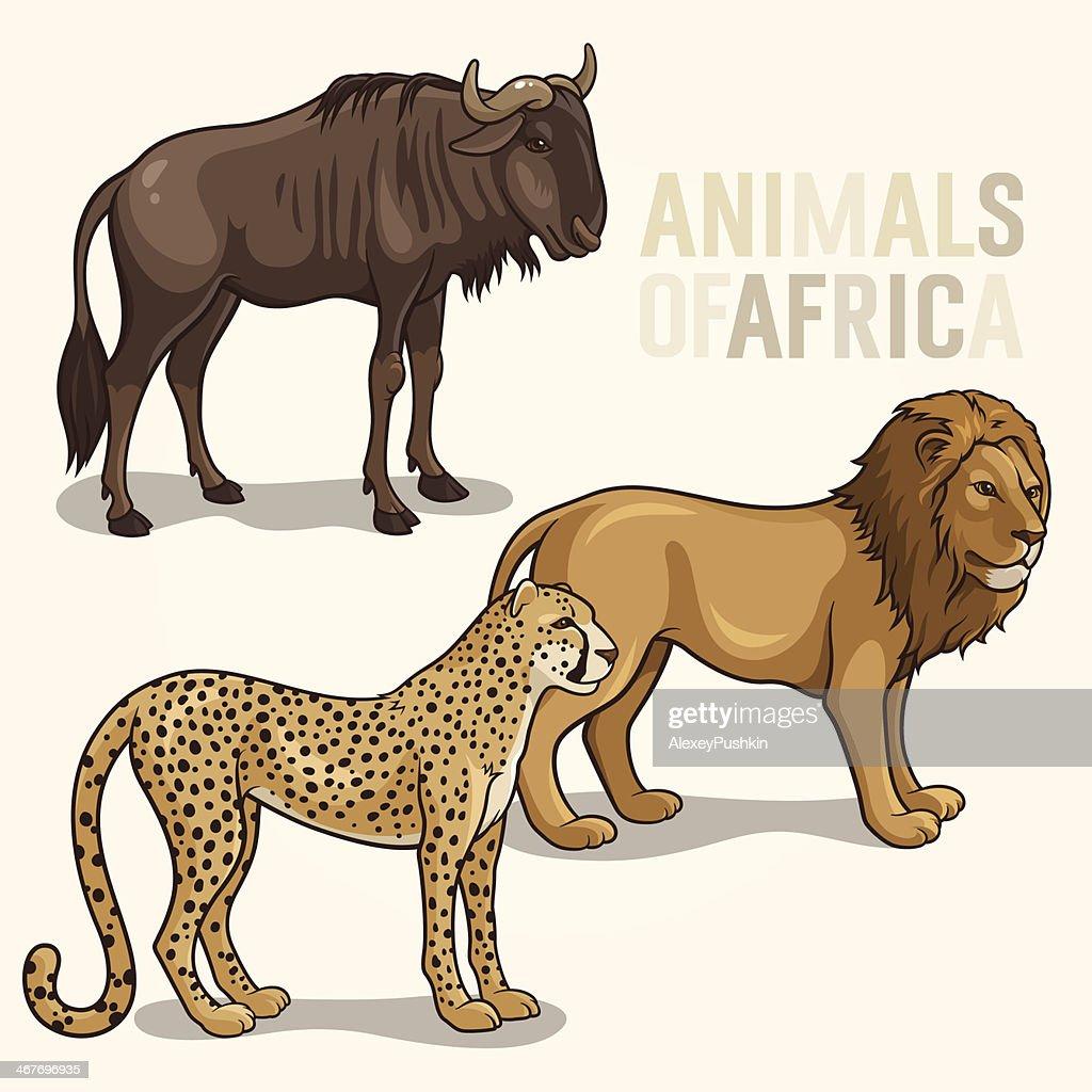 African Animals set2