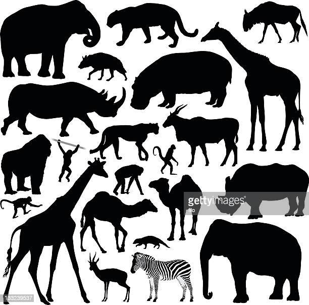 african animals - animal stock illustrations