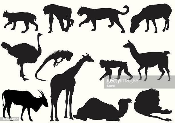 african animals - lynx stock illustrations, clip art, cartoons, & icons