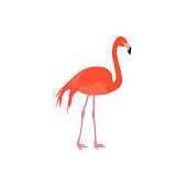 African beautiful flamingo icon vector illustration