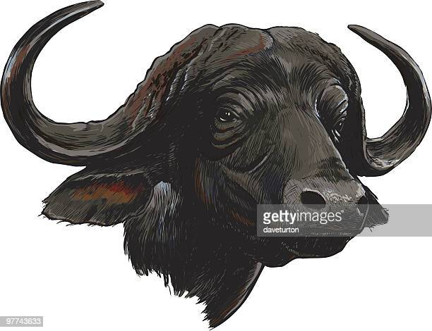 african cape buffalo, isolated on white - african buffalo stock illustrations, clip art, cartoons, & icons