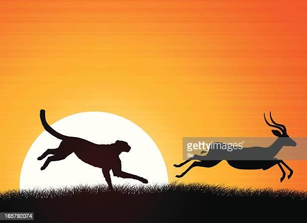 African Cheetah and Antelope