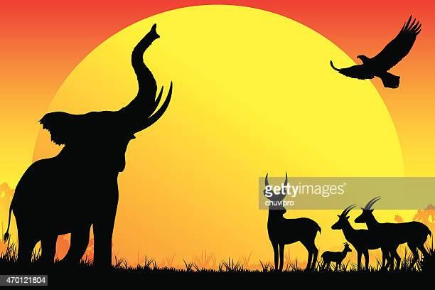 african elephant, antelopes, eagle silhouettes safari in hot day - safari stock illustrations, clip art, cartoons, & icons