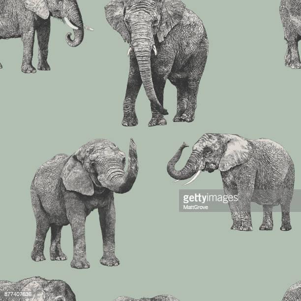 ilustrações de stock, clip art, desenhos animados e ícones de african elephant repeat pattern - elefante