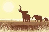 African Elephants in savanna