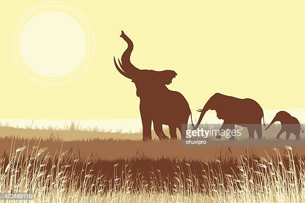 African Elephants in savanna