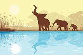 African Elephants near lake