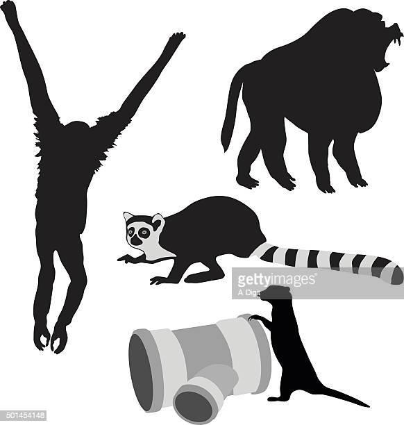 african favorites - lemur stock illustrations, clip art, cartoons, & icons