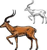 African gazelle or indian antelope animal sketch