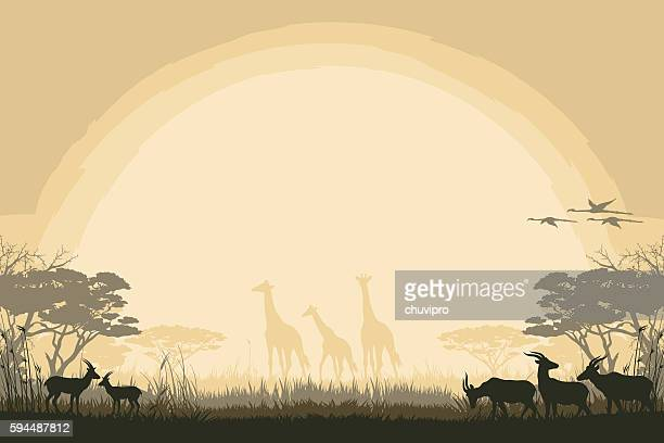 African safari background antelopes and giraffes