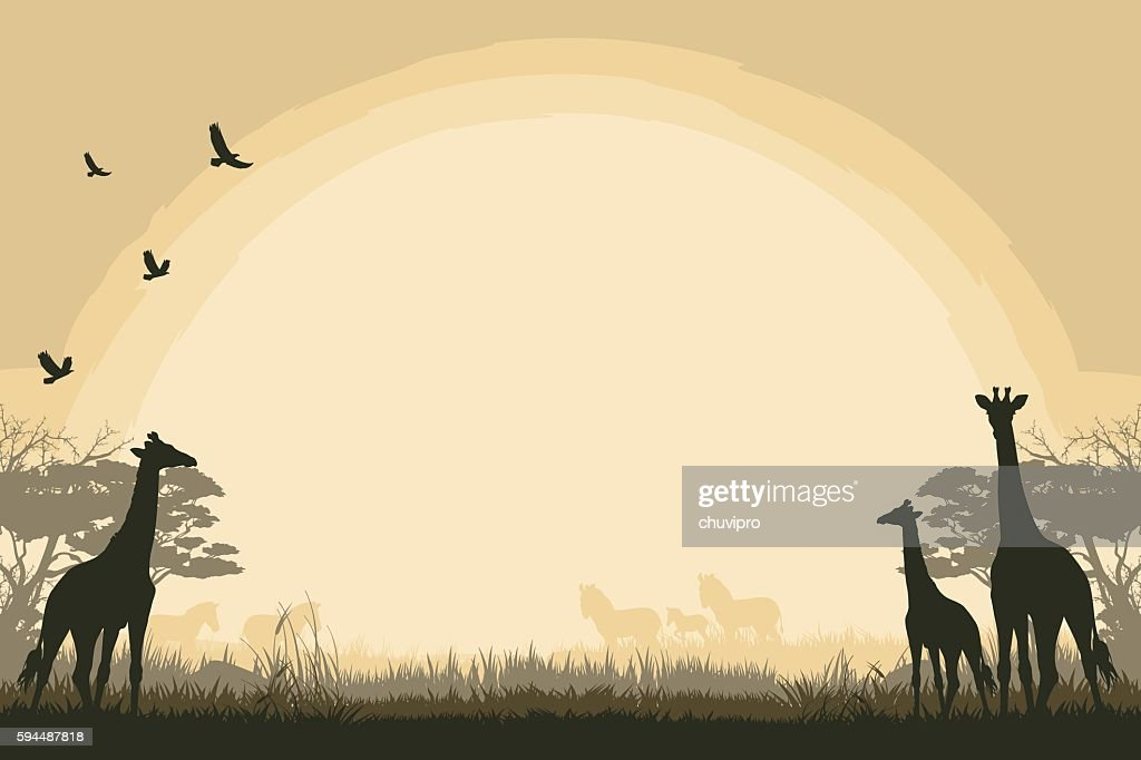 African safari background with giraffes and zebras : stock illustration