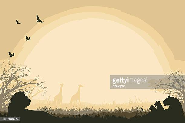 African safari background with lion pride and giraffes