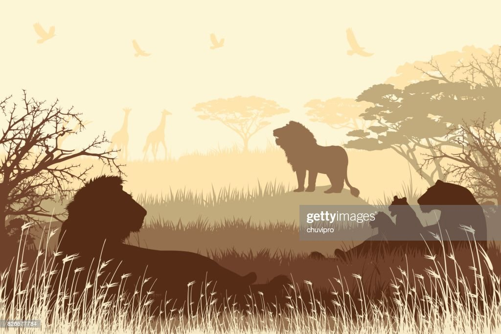 African Safari background with roaring Lions, Lioness and cubs : stock illustration